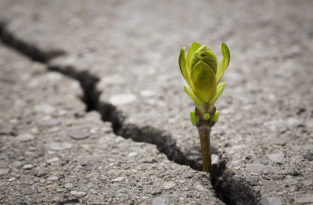 צמח מתחיל לגדול